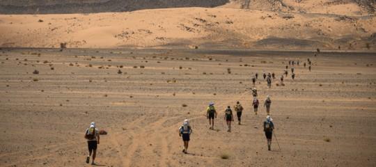 cane cactus maratona