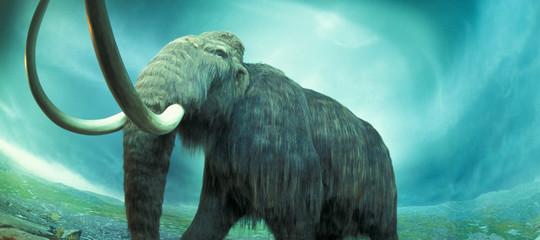 trovate ossa mammut indiana