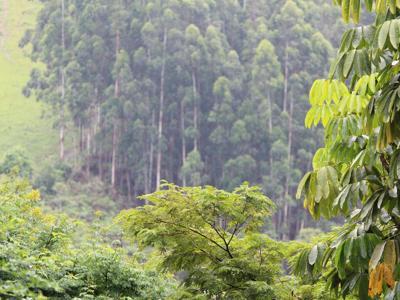 Wwf: Foreste antivirus del Pianeta ma le stiamo distruggendo