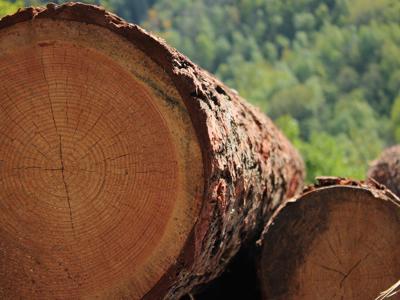 L'arte incontra la natura, al via concorso 'Scatta il bosco Pefc'