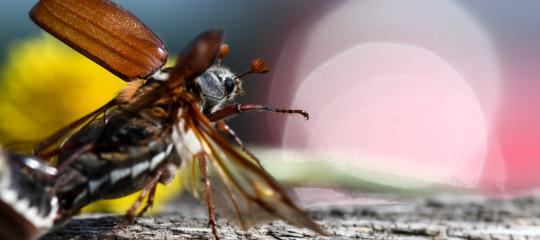 Tra 100 anni potrebbero sparire gli insetti