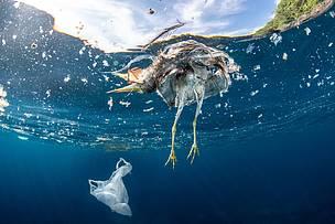 683b928bc8 Solo il bando del monouso toglierebbe il 40% di plastica dai rifiuti ...